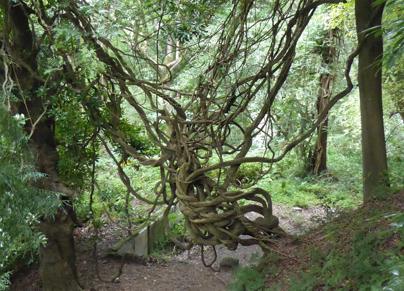 apa '15_Footnotes on... / Research, Botanical GardenBatumi, sep 2015 <br />